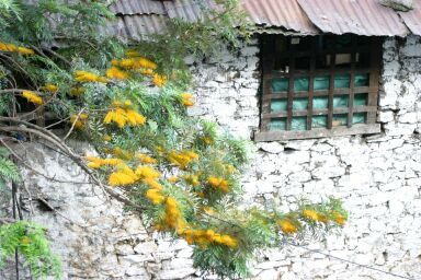 Farmhouse with yellow flowers